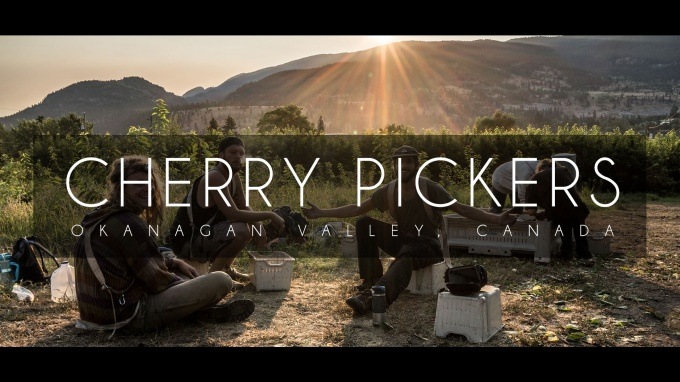 Cherry Pickers | Okanagan Valley